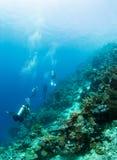 Dykare på en korallrev Royaltyfri Bild