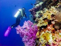 Dykare på korallerna Arkivbilder