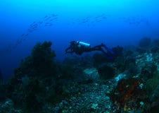 Dykare på korallreven royaltyfri foto