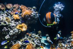 Dykare som gör ren akvariet arkivfoton