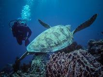 Dykare som tar fotografiet av sköldpaddan Royaltyfri Bild