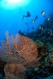 dykare som undersöker scubaen Arkivfoto