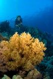 dykarekvinna Fotografering för Bildbyråer