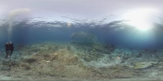dykaren för 360 vr simmar på en korallrev stock video