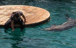 Dykaren inviterar delfin för att spela Royaltyfria Bilder