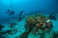 Dykaren och olika fiskar simmar i Gili, Lombok, Nusa Tenggara Barat, Indonesien det undervattens- fotoet arkivfoton