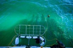 Dykaren skriver in hajburen för dyk in i hajen hemsökt vatten royaltyfri fotografi