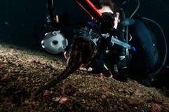 Dykaren tar fotoet video dykning för den seahorselembehindonesia dykapparaten Royaltyfri Bild