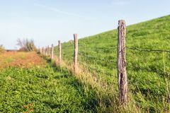 Fence consisting of a row of wooden posts with wire mesh. A covered with fresh green grass and a fence consisting of a row of wooden poles with gauze. The wooden royalty free stock image