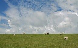 Dyke meadow landscape Stock Photo