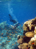 dyken vägledde Royaltyfria Foton