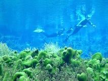 dykfjäder Arkivfoton