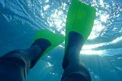 dykning Arkivfoto