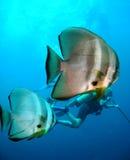 dykning Royaltyfri Foto