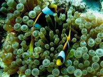 dykning egypt Royaltyfri Fotografi
