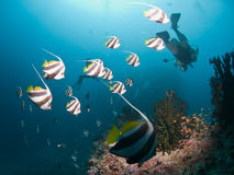 dykning maldives Royaltyfri Bild
