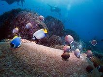 dykning thailand Arkivfoto