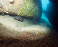 dykning thailand Arkivbilder