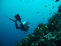 dykninghav Royaltyfria Foton