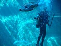 dykningscuba Arkivfoton