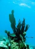 dykningscuba Royaltyfria Bilder