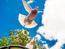 Dykt i flykten under en blå himmel Royaltyfria Bilder