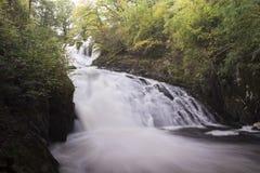 Dymówka spadki, Coed, Conwy dolina, Snowdonia, Walia zdjęcia stock