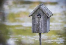 Dymówki ptasi gniazdować w ptasim domu zdjęcie stock