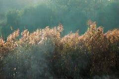 Dym nad Trzcinową trawą Fotografia Royalty Free
