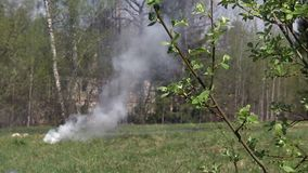 Dym od ogienia w lesie zbiory wideo