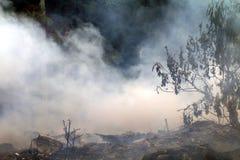 Dym oparzenie odpady zanieczyszczenia śmieciarski pył dużo, dymi wytwarza paleniem śmieciarskim w lasowym tle zdjęcia stock