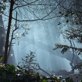Dym Przez drzew Obraz Stock