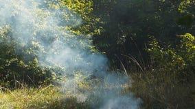 Dym w lesie zbiory