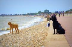 Dymchurch beach holiday-makers Kent United Kingdom. Holiday-makers and pets at Dymchurch and St.Mary`s beach,Kent United Kingdom Royalty Free Stock Photos