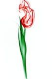 dymny czerwień tulipan Fotografia Stock