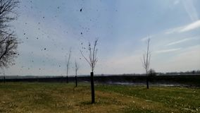 Dymu i popiółu tornado, dymny okółek, pyłu diabeł wynika tli się palącego obszaru trawiastego pole swobodny ruch zbiory