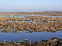 Dyn av den Texel nationalparken Royaltyfri Bild