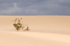 Dyn av Fuerteventura Royaltyfri Bild