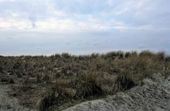 Dyn av kusten för baltiskt hav i nordlig Tyskland Royaltyfri Bild