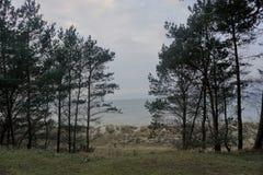 Dyn av kusten för baltiskt hav i nordlig Tyskland Royaltyfri Fotografi