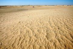 Dyn av Sahara Royaltyfria Foton