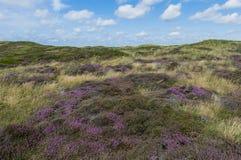 Dyn av Texel Fotografering för Bildbyråer