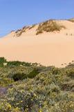 Dyn, blommor och vegetation i stranden i Almograve Arkivfoto
