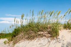 Dyn för Coquina strandsand och strandgräs på hästkrakehuvudet Arkivfoto
