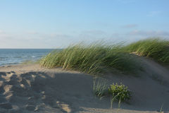 Dyn gräs i vinden på Nordsjönstranden med många sand arkivbilder