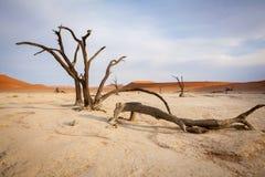 Dyn i den Namib öknen royaltyfria foton