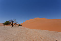 Dyn 45 i sossusvleien Namibia med det döda trädet Arkivfoton