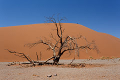 Dyn 45 i sossusvleien Namibia med det döda trädet Royaltyfria Bilder