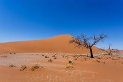 Dyn 45 i sossusvleien Namibia med det döda trädet Fotografering för Bildbyråer