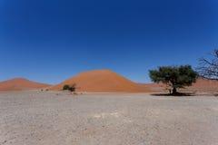 Dyn 45 i sossusvleien Namibia med det döda trädet Arkivbild
